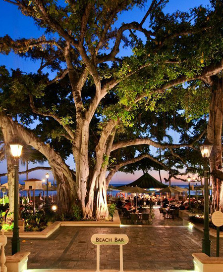 evening view of the historic Banyan Tree at the Beach Bar at the Moana Surfrider