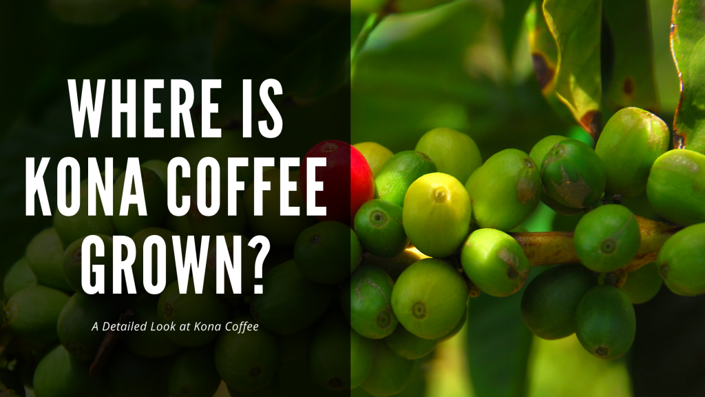 Where is Kona Coffee Grown? History, Background, and More!